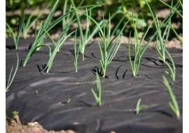 Прогревание почвы с помощью геотекстиля (спандбонда)