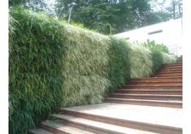 Вертикальное озеленение дома с помощью габиона